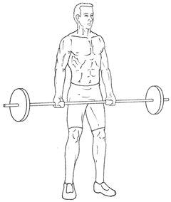 Barbell Biceps Curls - Bottom of Exercise