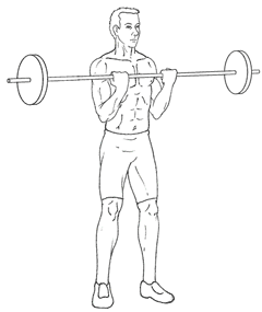 Barbell - Biceps Curls - Top of Exercise