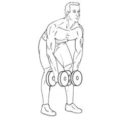 Bent-Over Lateral Raises - Bottom of Exercise