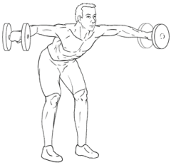 Bent-Over Lateral Raises - Top of Exercise
