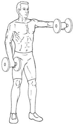 Front Raises - Bottom of Exercise