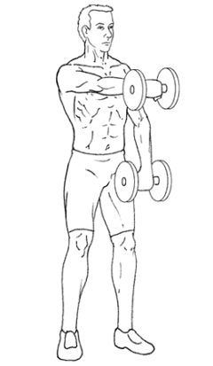 Front Raises - Top of Exercise