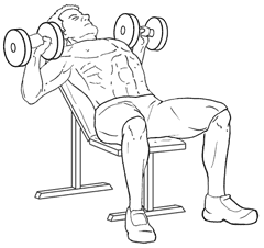 Incline Dumbbell Bench Press - Bottom of Exercise