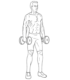 Lateral Raises - Bottom of Exercise