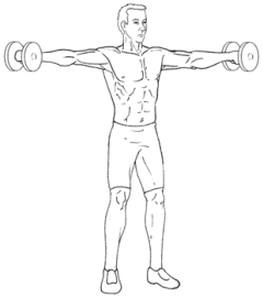 Lateral Raises - Top of Exercise