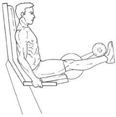 Leg Extensions - Top of Exercise