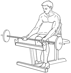 Preacher Curls - Bottom of Exercise