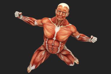Lean Body Mass (LBM)